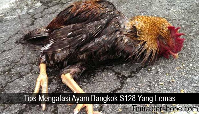 Tips Mengatasi Ayam Bangkok S128 Yang Lemas