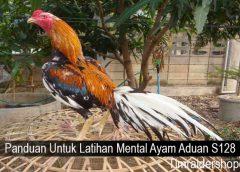 Panduan Untuk Latihan Mental Ayam Aduan S128